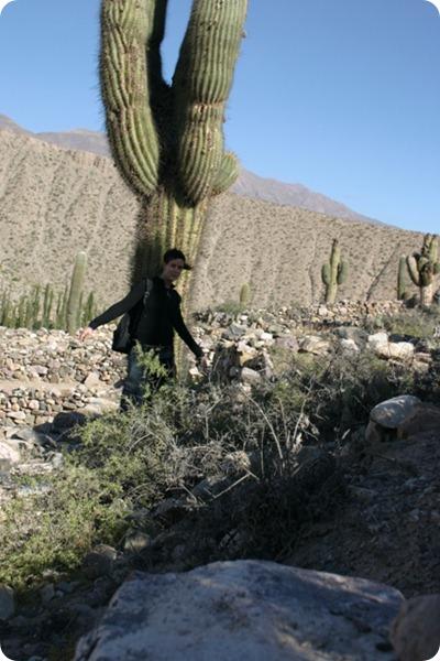 Calilegua_cactus