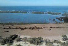 Peninsola di Valdés. vero paradiso naturale nel cuore della Patagonia.