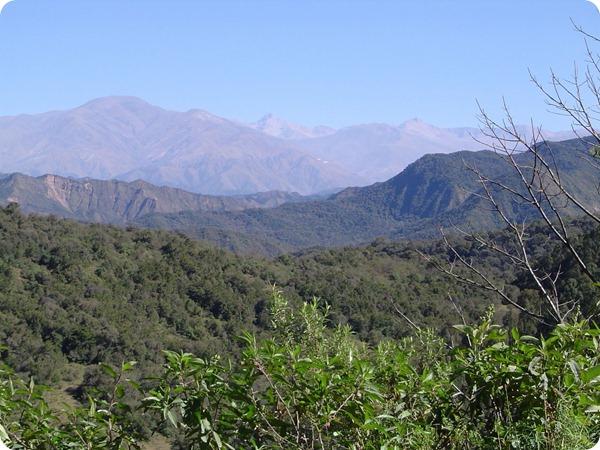 Yunga-forest-Jujuy-Argentina