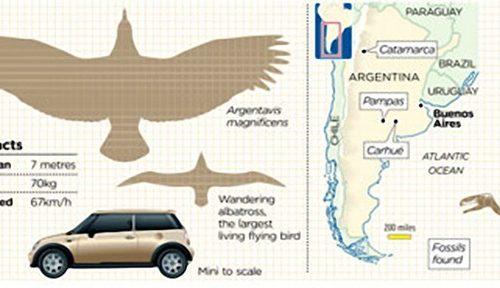 L'Argentavis magnificens solcava i cieli dell'attuale Argentina sei milioni di anni fa.