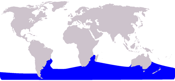 balena franca areale