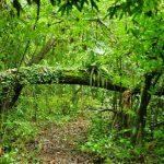 Parco Nazionale Calilegua, tra yungas, prati alpini e montagne.