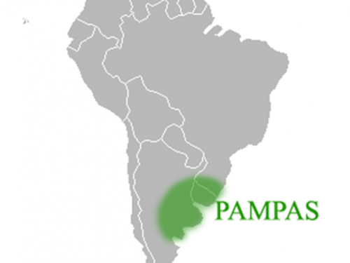 Pampas pianura senz'alberi suddivisa in Pampa umida e Pampa occidentale.