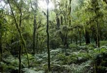 Parco Nazionale Baritú importante riserva ecologica del settore nord-occidentale argentino.