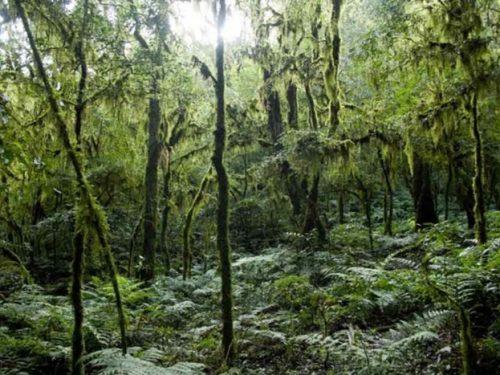 Parco Nazionale Baritù importante riserva ecologica del settore nord-occidentale argentino.