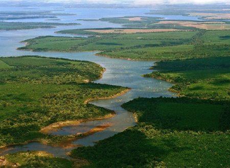 Mesopotamia argentina un luogo dove crescono una fauna e una vegetazione generosa ed indomita.