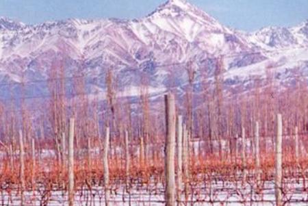 Le strade del Vino nella Patagonia Argentina, circa 188 mila ettari.